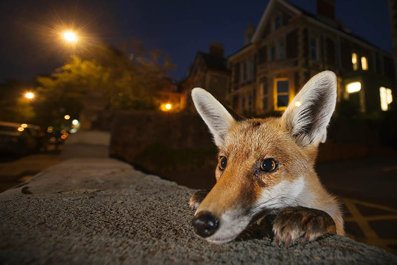 800-sam-hobson_wildlife-photographer-of-the-year